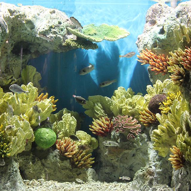 9cd7b491a511 Pg Reef Insert Acrylic Decoration Aquarium Coral Rock - Buy ...