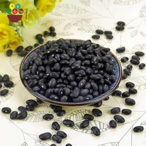 Origin natural dried bulk small black kidney beans turtle bean with low price