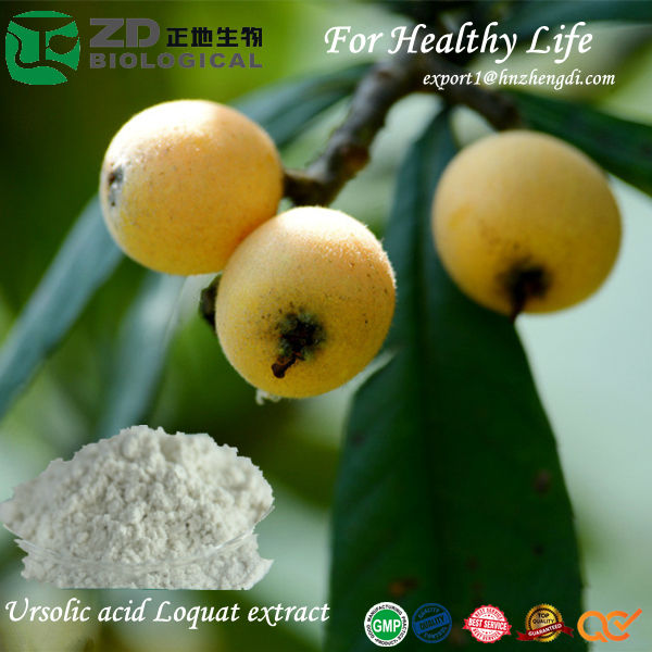 high quality natural herbal Extract Ursolic acid solvent residue free Loquat extract for anti-hepatitis Pharmaceuticals Medicine
