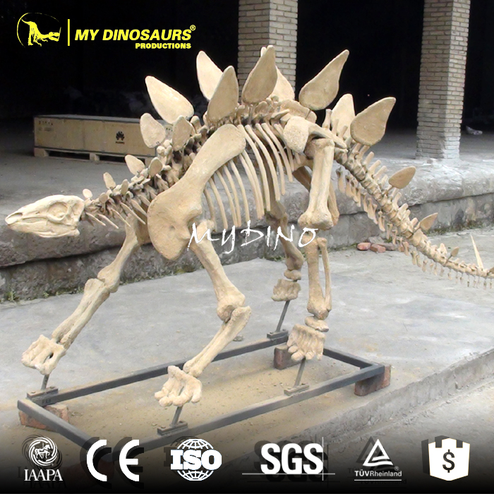 Mi-dino Alta Auténtico Esqueleto De Dinosaurio Réplica - Buy ...