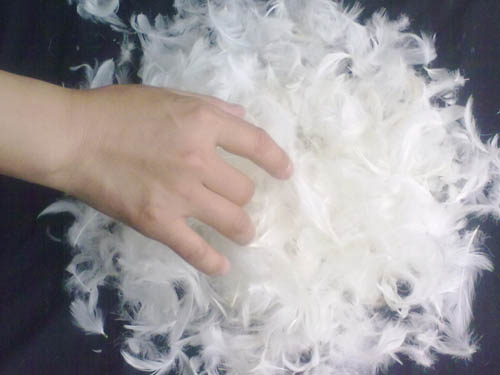 Popular Washed White Goose Feather 15% Goose Down Wholesale