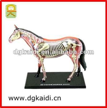 4d Anatomía Diseño Desmontable Juguete Animal Del Caballo - Buy ...
