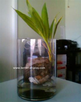 Wholesale Clear Acrylic Plants Terrarium Buy Clear Acrylic Plants