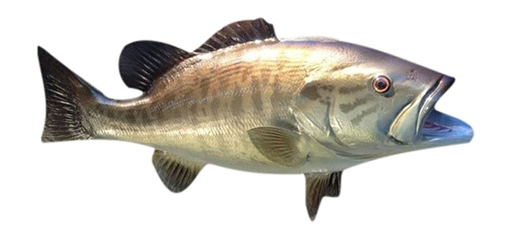 Buy Bass Fish Wall Mount Fish Replica Trophy, For Restaurant