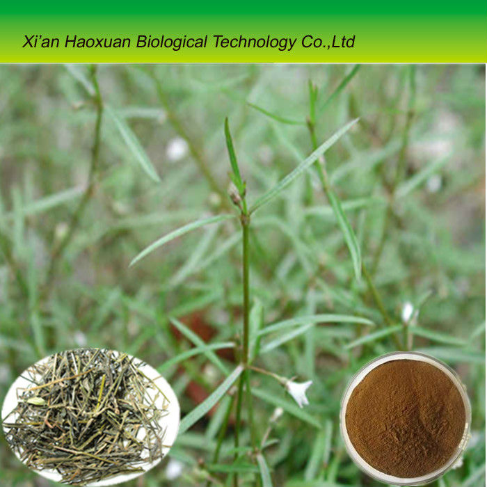 Natural Herb Oldenlandia Diffusa P.E. powder extract with best quanlity