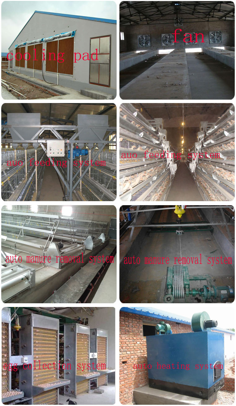 4 tier chicken layer cages automatic poultry cages galvanized wire mesh battery broiler cage price for Uganda Philippine sale