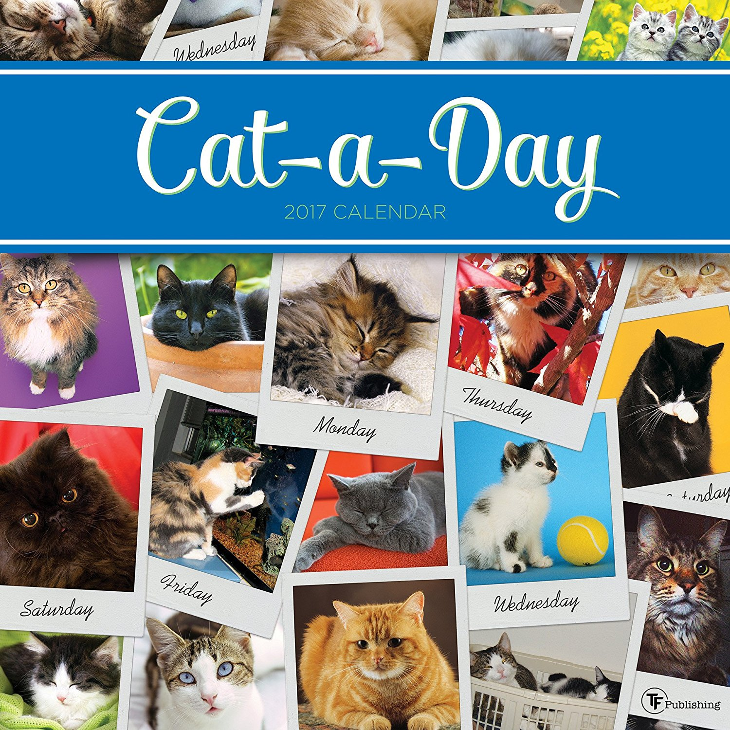 2017 cat a day wall calendar tf jg great holiday christmas