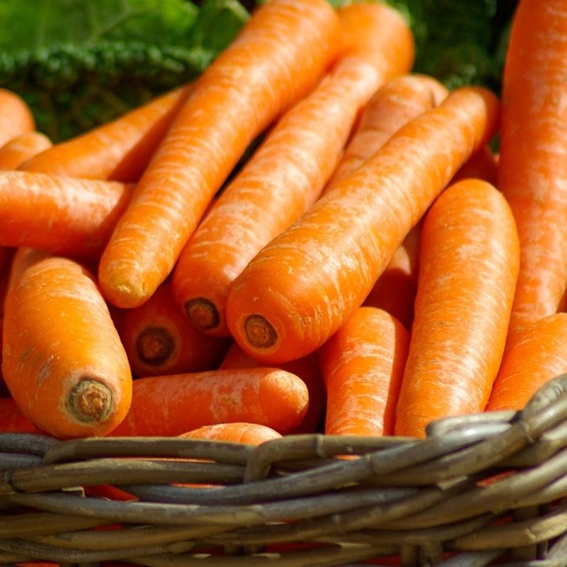 Premium fresh organic carrots