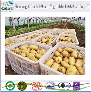 2017 fresh potato importers in dubai