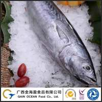 Wild Caught Bonito Frozen Whole Fish Wholesale