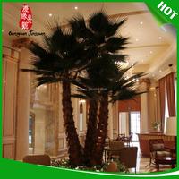 Top quality medjool date palms