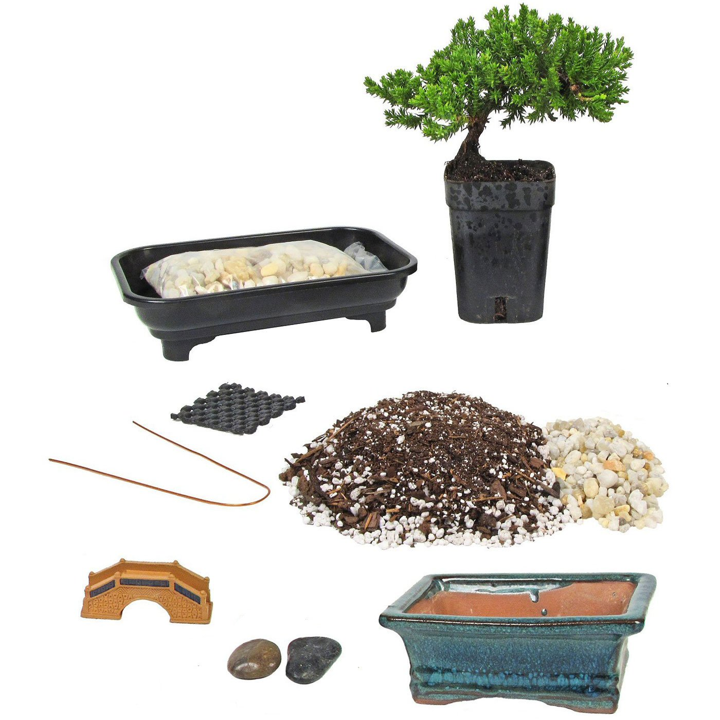 Eve's Deluxe Bonsai Tree Starter Kit, Complete Do-It-Yourself Kit with 4 Year Old Petite Japanese Juniper