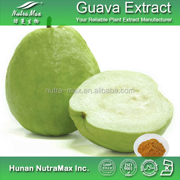 2016 Hot Selling Food Grade Powder Form Dried Guava Leaf Extract Powder With Competitive Factory Price