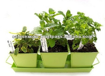 Kitchen Herb Planter Kit Growing Container Garden
