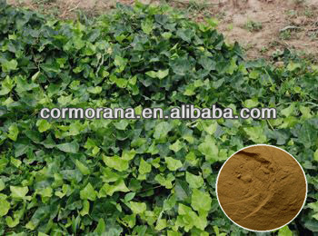 High Quality Hedera Helix Extract,Ivy Leaf Extract Powder,3%~15%  Hederagenin - Buy Ivy Leaf Extract Powder,Ivy Extract,Ivy Leaf Extract  Product on