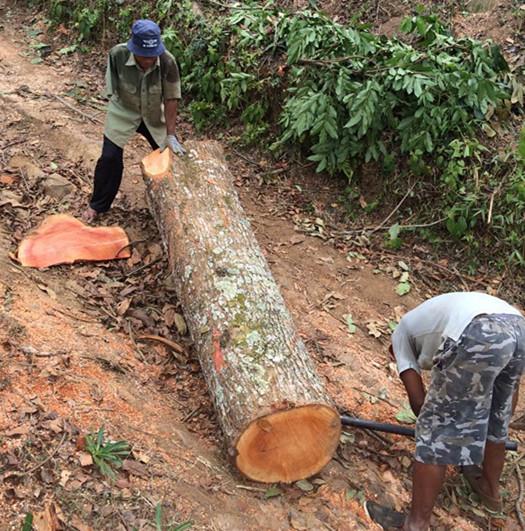 Raw Timber Of Flooring/plank/lumber