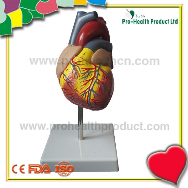 Insan Kalp 2 Yılında 11 ölçekli Parçası Boyama Numarası Sözler Ile