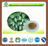 GMP factory supply Hot sale high quality Isatis Root Radix Isatidis powder