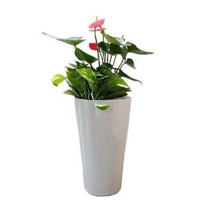 Paper flower pot covers paper flower pot covers suppliers and paper flower pot covers paper flower pot covers suppliers and manufacturers at alibaba mightylinksfo