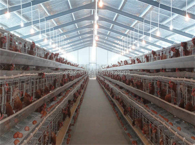 poultry house design for layers in kenya farm
