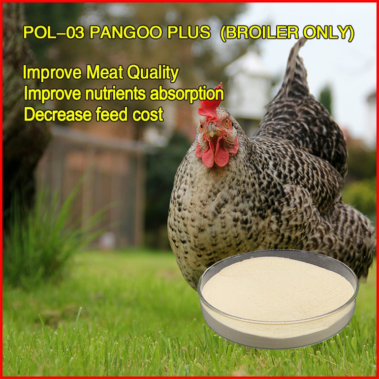 hot sale poultry, chicken, pigeon probiotic concentrates feed