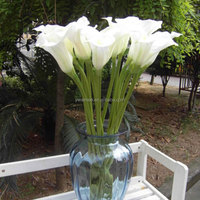 Yiwu Aimee supplies large size real touch calla lilies wholesale , artificial real touch calla lily(AM-YD021)