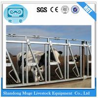 Steel Cow Head Lock Cattle Head Lock for Dairy Farm