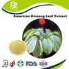 EC396 standard good water solubility American ginseng leaf extract