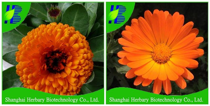 mooie bloem zaden/calendula officinalis zaden voor het planten