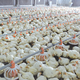 high quality modern broiler equipment poultry shed design chicken farm