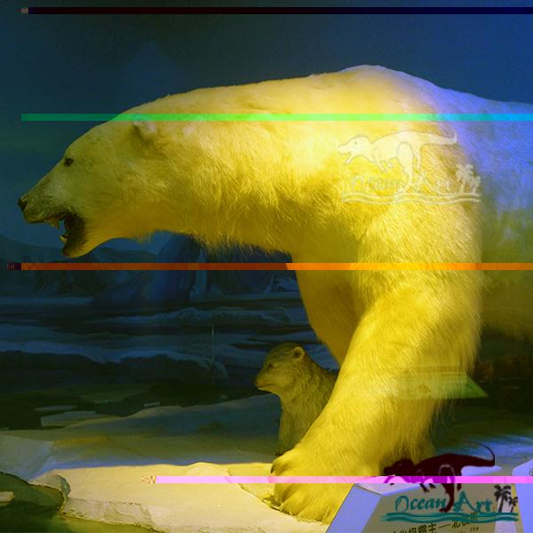 750 Gambar Animasi Semua Hewan HD