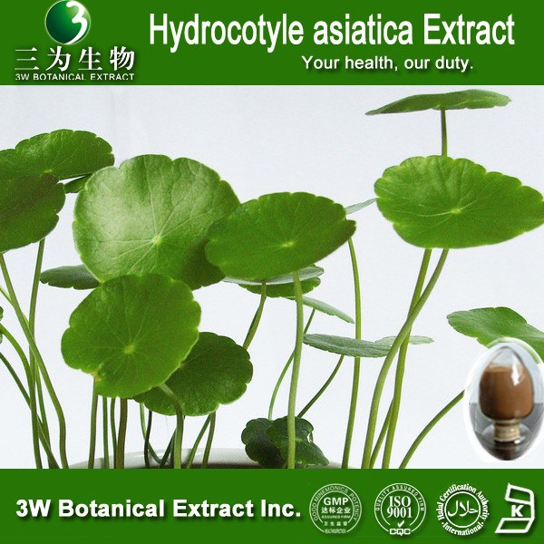 Hydrocotyle asiatica Extract 10%- 80% Triterpenes; Madecassoside 90%-95%;Asiaticoside 40%-95%