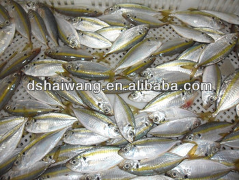 Frozen Goggle-eye Fish From China - Buy Goggle-eye Fish,Bigeye  Scad,Purse-eye Scad Product on Alibaba com