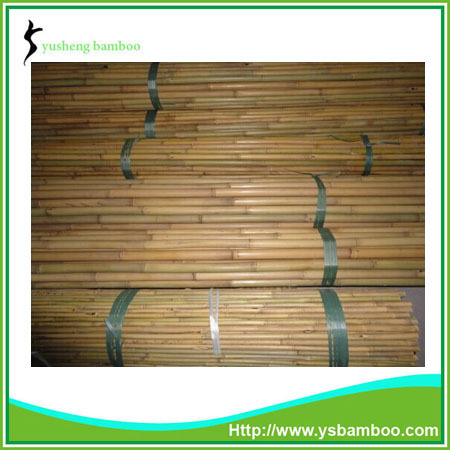 bamboo pole/cane/stake for agricultural use