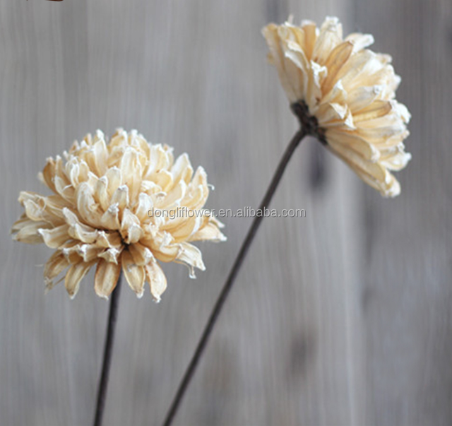 Dried White Flowers Source Quality Dried White Flowers From Global