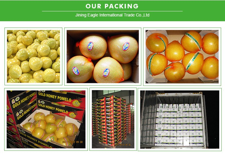 Fresh sweet honey pomelo fruit with good quality from China hot sale