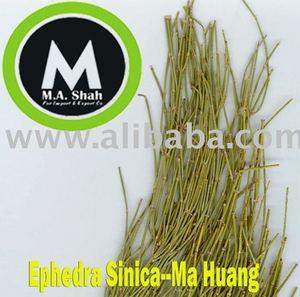 Ephedra Sinica--Ma Huang Exporter