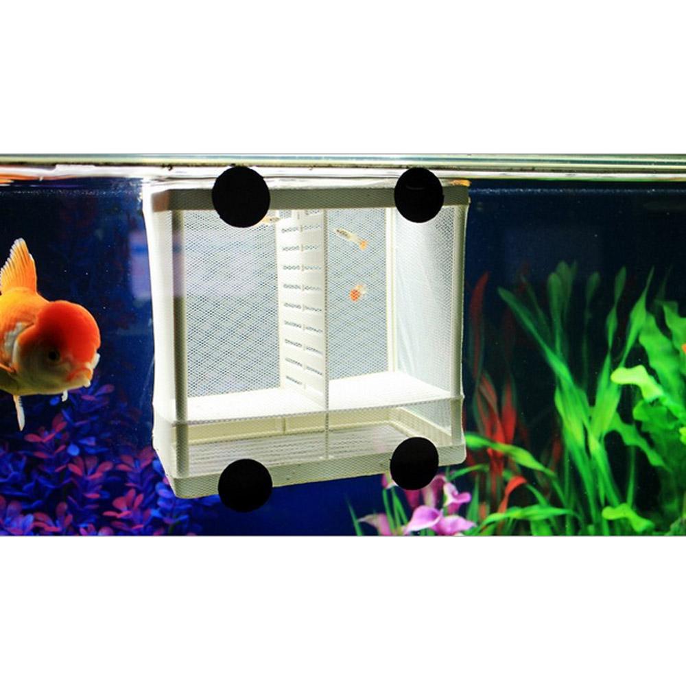 Freshwater aquarium fish breeding - Fish Breeding Box Fish Breeding Box Suppliers And Manufacturers At Alibaba Com