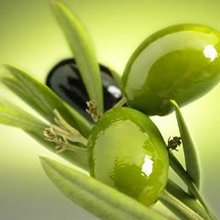 Finest Olives from Turkey in various types and sizes