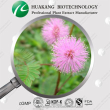 Freshly dried and powdered Mimosa Hostilis Powder ,mimosa pudica powder