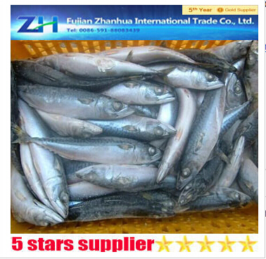 fresh frozen pacific mackerel scomber japonicas whole around Real price CNF$640