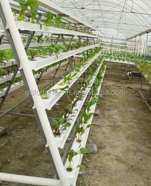 Hydroponics and Commercial Greenhouses for Desert and Semi-arid Tomato Lettuce Strawberry Production
