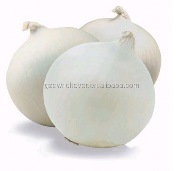Aon510 white color open field planting F1 hybrid onion seeds