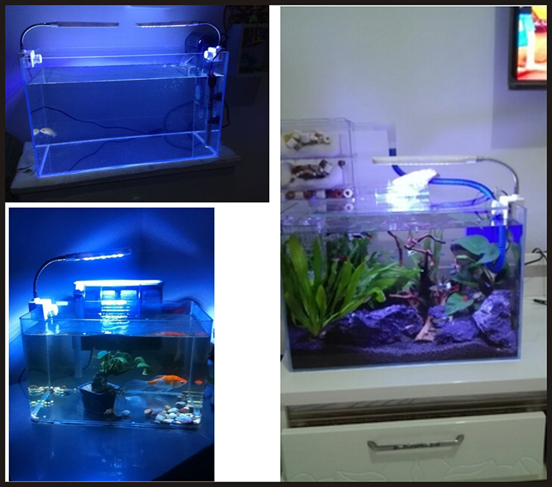 Aquarium Led Nemolight Quality Black Diamond Stingrays Fishes For ...