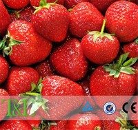 3D fresh fruit photo wallpaper mural