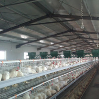 high quality poultry farm supplies