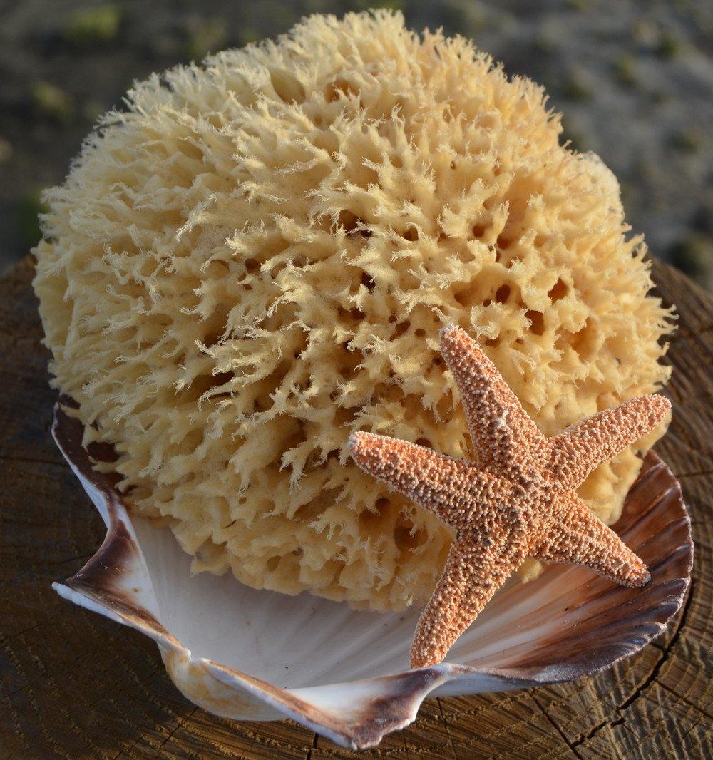 Cheap Wool Sea Sponge, find Wool Sea Sponge deals on line at Alibaba.com