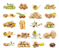 Flavor Agent Nut Flavor For Dairy/beverages/ Bakery /candy/ Ice ...