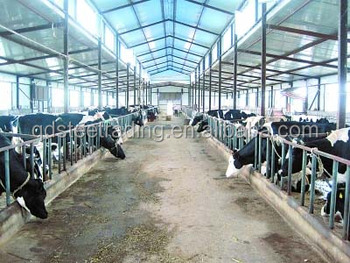 Steel Structural Dairy Farm Shed Buy Steel Structural