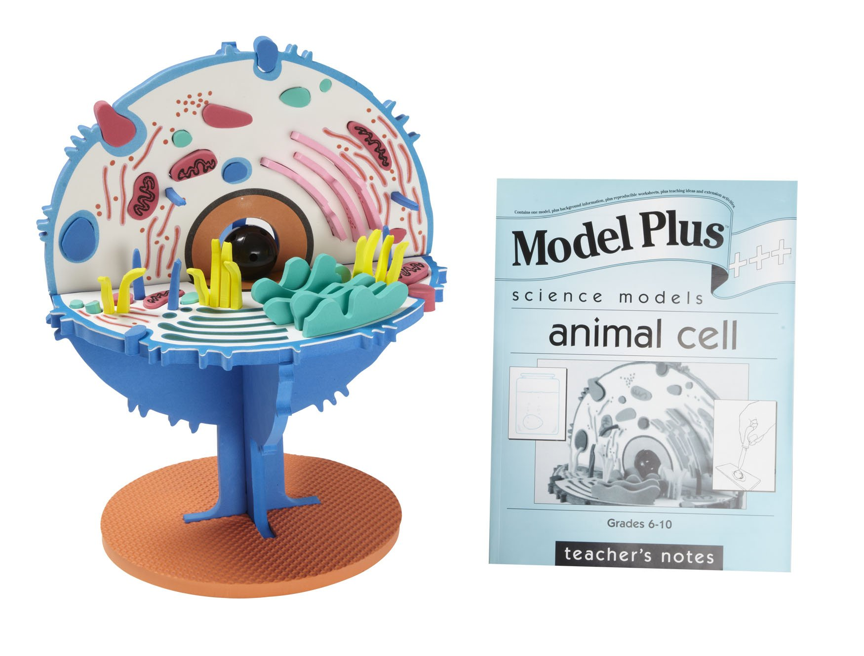 3D Model EISCO Plastic Animal Cell Electron Microscopic Structure